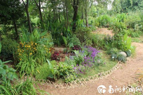 """【课堂】南湖畔开辟精致""""小花园"""" 花卉学实习课练就看家本领"""