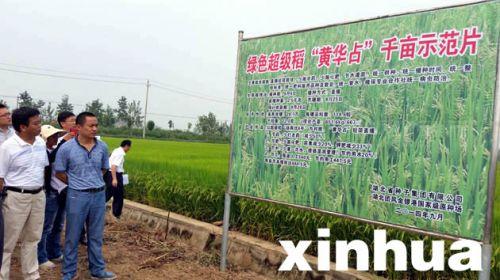 """绿色超级稻""""黄华占"""":每亩节本增效444.5元"""