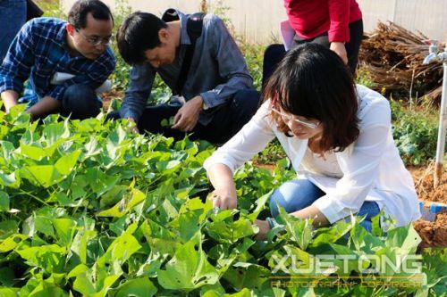 2-植保专业学生的油菜播种已经两个多个星期了,嫩绿的菜叶上有不少虫眼