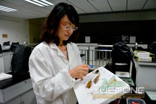 4-王佳璐在为学通社记者介绍枯叶蛾针插标本