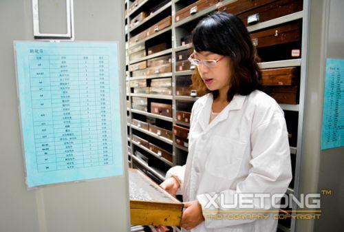 5-王佳璐在标本室高大的柜子前整理针插标本盒