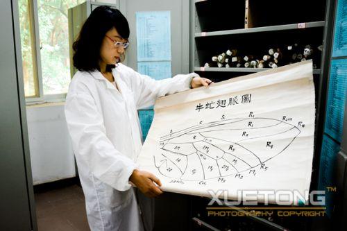6-王佳璐向学通社记者展示一张手绘挂图,这张挂图已经有几十年的历史了