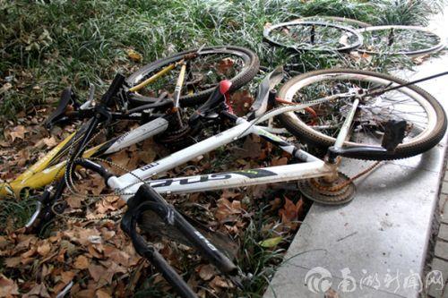 梧桐路杂乱的废旧自行车