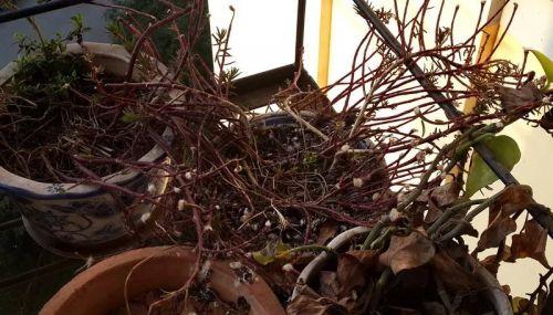 3月24日早上,这只斑鸠也不见了。曾经热闹温馨的一隅突然变得空空荡荡,只在我心中留下淡淡的惆怅