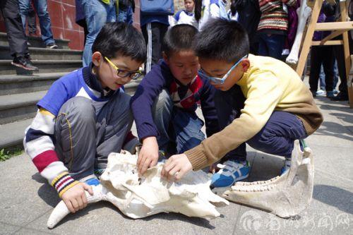 小朋友们认真研究要拼装的骨骼