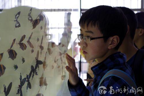 认真观察蝴蝶标本,增长学习知识