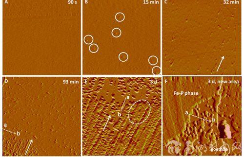 原子力显微镜下针铁矿(010)解理面诱导磷酸铁的成核和生长动力学过程的原位观察