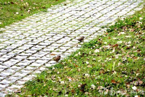 草丛旁停留的鸟儿