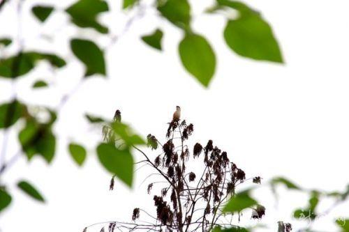 傲然于树梢上的鸟