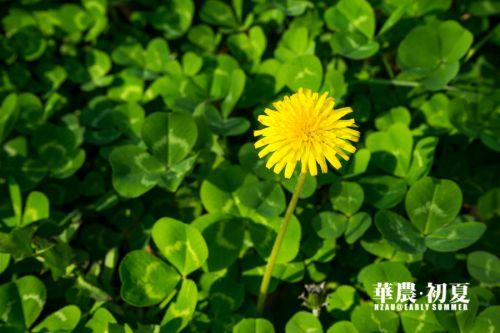 9.夏日多晴,路旁的小花染上了太阳的热烈