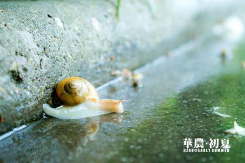 11.然而当雨后水汽氤氲,湿漉漉的台阶上,细心的你是否发现正有蜗牛安然自怡