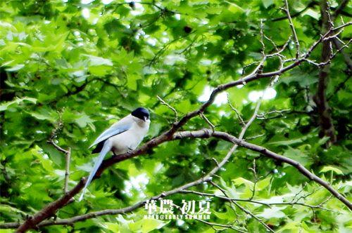 12.或是出门呼吸一下雨后清新的空气,听听鸟儿在树梢头上吱喳