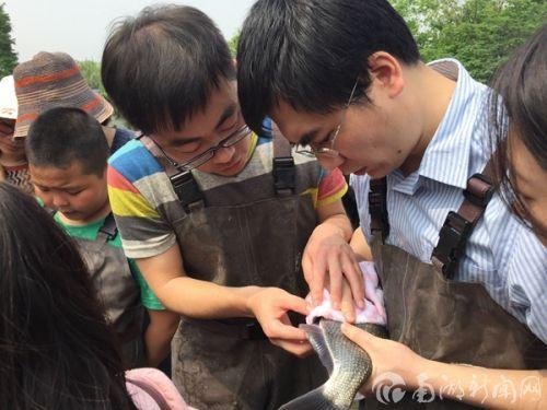 青年教师进行人工挤卵