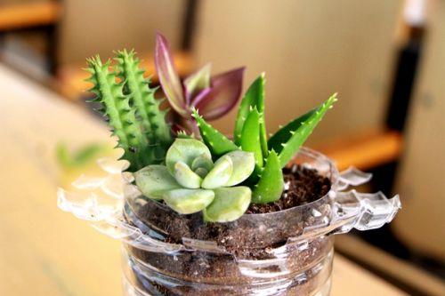 植物diy,废物利用,践行环保