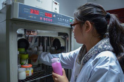 同学们将酸奶放入培养箱 吕岩