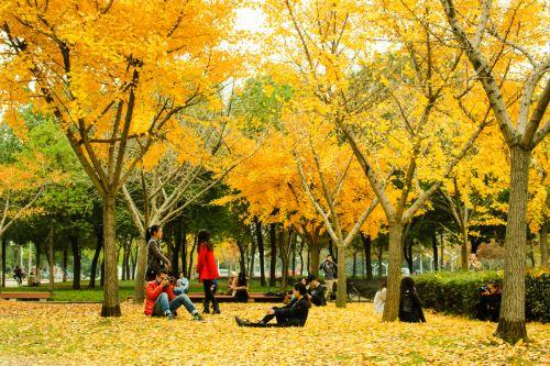 狮子山广场上的银杏小树林引来众多游人-韩叙