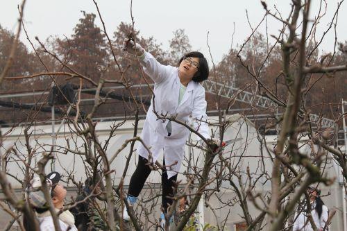 园艺专业果树冬季整形修剪技能竞赛举行