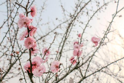 【美丽华农】2016流行色弥满校园|组图