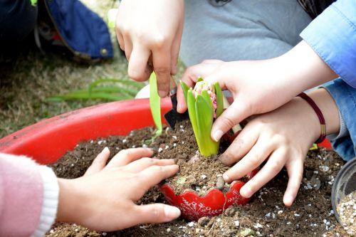大家一起来DIY植物
