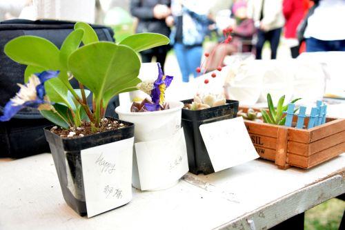 贴着祝福,作为爱心赠与孤儿院小朋友的小植物