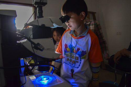 小科学家观察斑马鱼