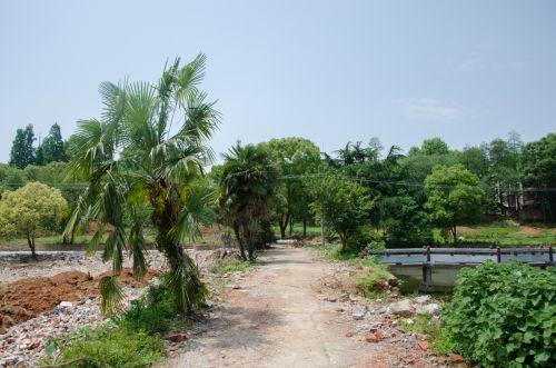 建造中的景观公园 吕岩