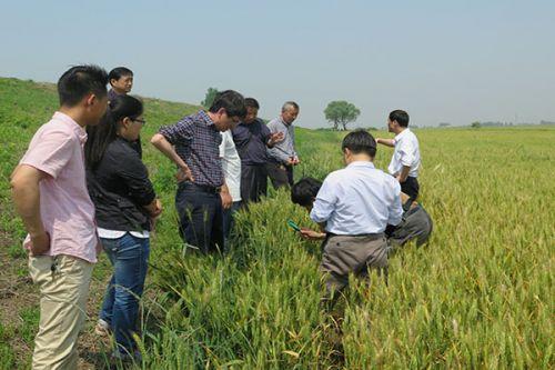 我校专家赴孝感指导农业病虫害防治工作