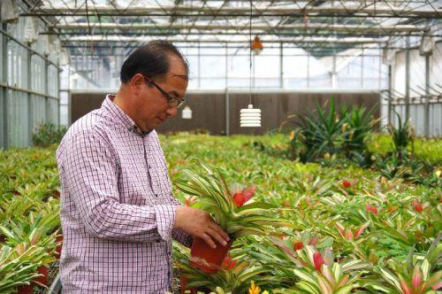 王文恩在大棚里为植物施肥