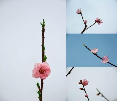 5图五 一枝春