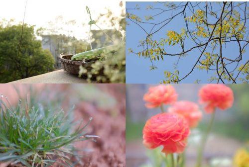 6图六 春朦·春萌
