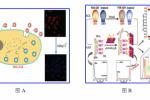 纳米生物团队在量子点生物传感研究方面取得突破性进展
