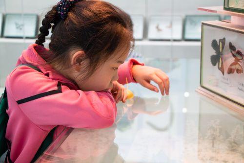 博物馆里看的入迷的小姑娘【周子恒】