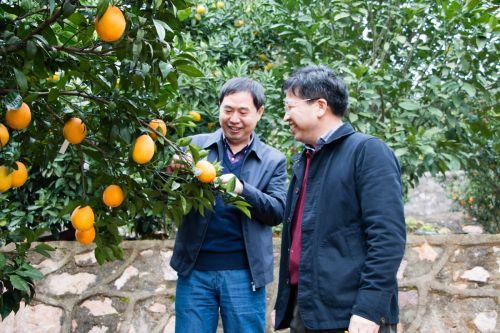 邓校长与西北农林大的康教授在果园【周子恒】