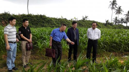 校领导率队赴海南现场办公解决南繁基地发展问题1