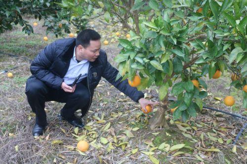 刘继红在果园  作者:廖胜才
