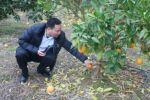 果树系教授赴县镇晚熟脐橙果园提供技术支持