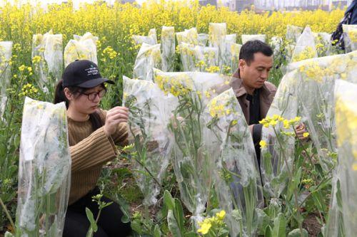在张椿雨教授的指导下,同学们对油菜进行重新套袋
