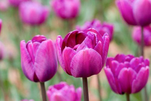 春风一刹,花开一丛-黄嘉伟