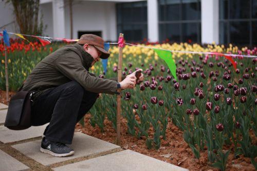 观赏者记录下花儿美丽的姿态-伍儆人