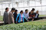 我校专家前往荆门市开展设施蔬菜技术培训