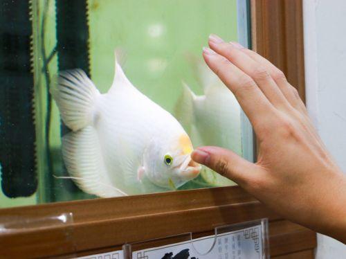 和招财鱼互动 聂商辉