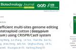 棉花团队在基因组编辑和抗虫研究取得新进展