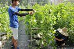 【耕读】调研新型农业,体验前沿技术