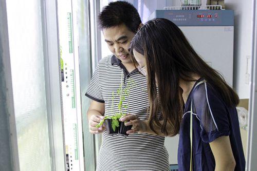 吕老师带领实践团队参观组培室
