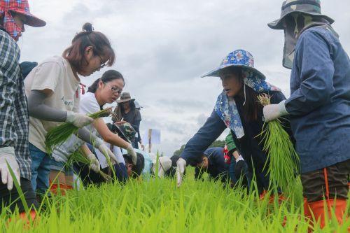 10 同学们认真准备水稻栽培课程