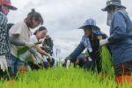 【耕读】一带一路:我校15名学生赴泰国问学绿色农业