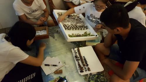 学生在制作标本