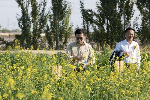 郭亮教授、周广生教授察看盐碱地饲料油菜种植情况