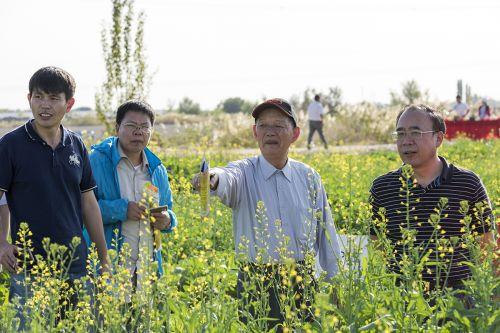 傅廷栋、关桓达等查看盐碱地饲料油菜种植情况