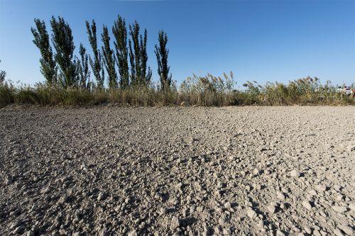示范田隔壁的盐碱地